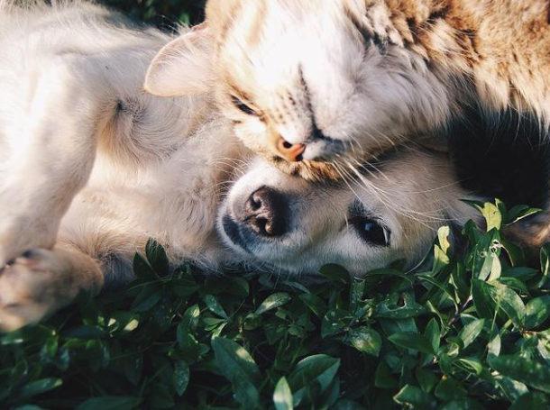 animales-zoonosis-enfermedades