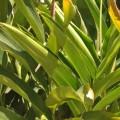 Plantas-medicinales-dieta