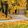consejos-salud-otoño