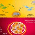 investigacion-antitumoral-estudio-ratones