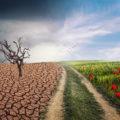 OMS-reclama-fondos-proteger-salud-cambio-climatico