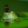 microplásticos-anfibios-vida-fluvial